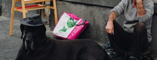 Dispensarire vétérinaire etudiant